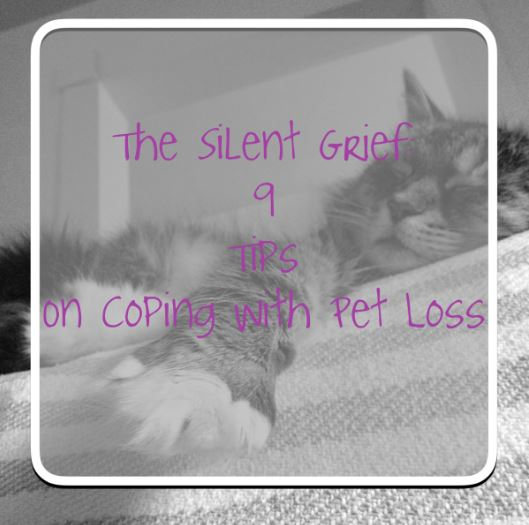 The Silent Grief: 9 Tips on Coping with Pet Loss-pet loss/dog loss/cat loss|thekitcheneer.com